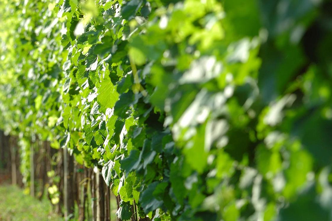 A Piglio si produce vino e si guarda all'inclusione sociale