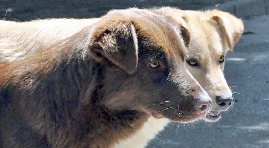 «Se abbandoni sei complice». Il Comune di Roma in difesa degli animali domestici
