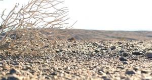 Il 30 per cento delle terre del pianeta è a rischio desertificazione