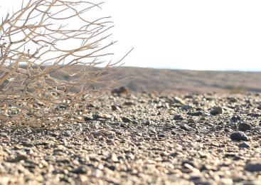 Un terzo delle terre del pianeta è a rischio desertificazione