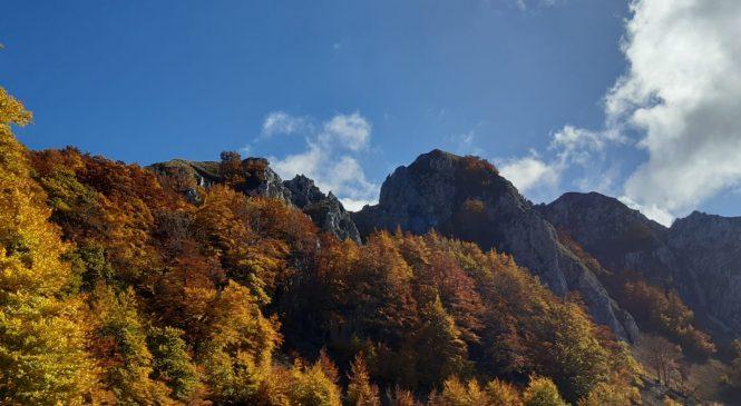 Il Lazio pianta sei milioni di alberi. Al via la campagna «Ossigeno»