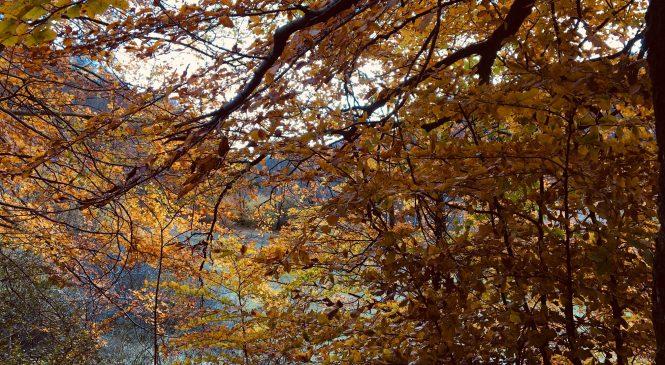 Ogni anno nel mondo perdiamo 15 miliardi di alberi
