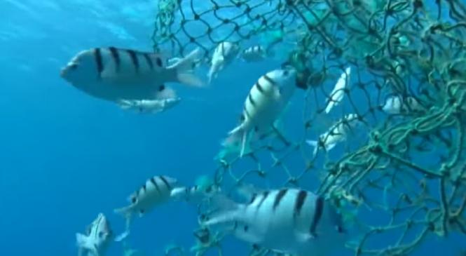Almeno 116 specie di pesci hanno ingerito plastica nel Mediterraneo