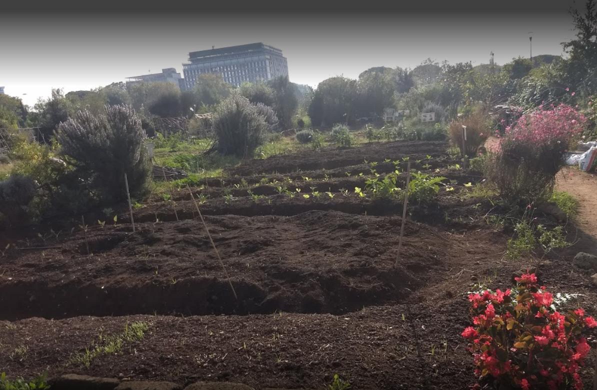 Gli orti urbani di Roma, la resistenza verde alla fame di asfalto