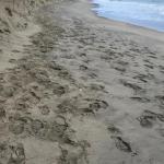 Cento chilometri di costa erosa nel Lazio. Il dossier di Legambiente