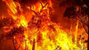 l'australia uccide le foreste