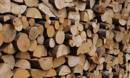 Operazione Arcadia contro il traffico illecito di legname